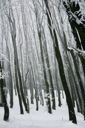 2010-01-23-14-20-08-shipka-i-smolian