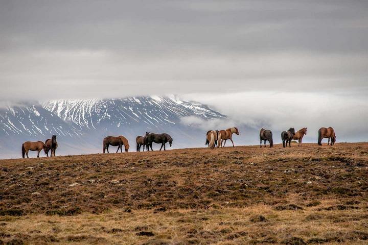Да споделиш Исландия-ден шести