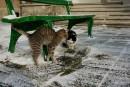 За котката и фотографията